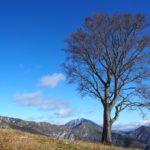 中倉山(足尾山地) 孤高のブナを眺めに ~ 銅親水公園 ピストン 日帰り登山 ~
